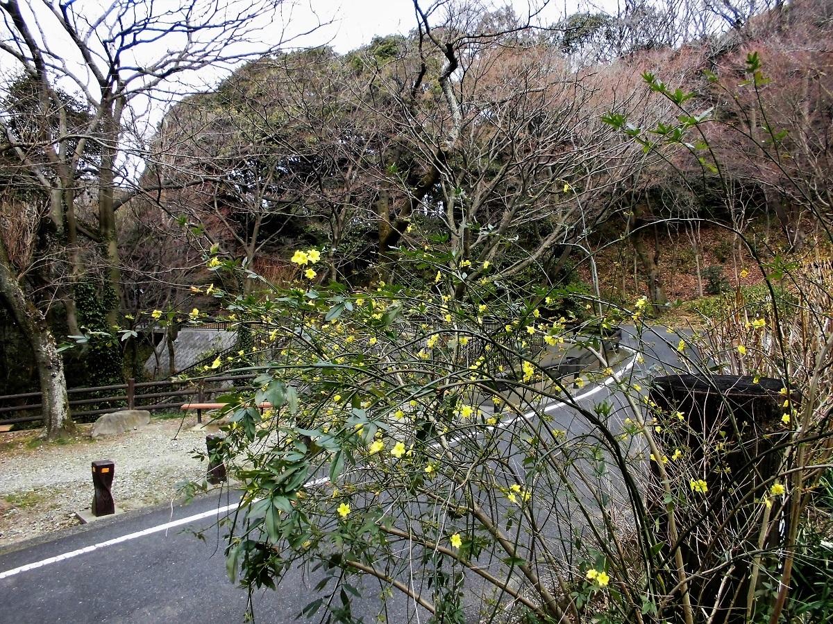 足立山森林公園�A.jpg