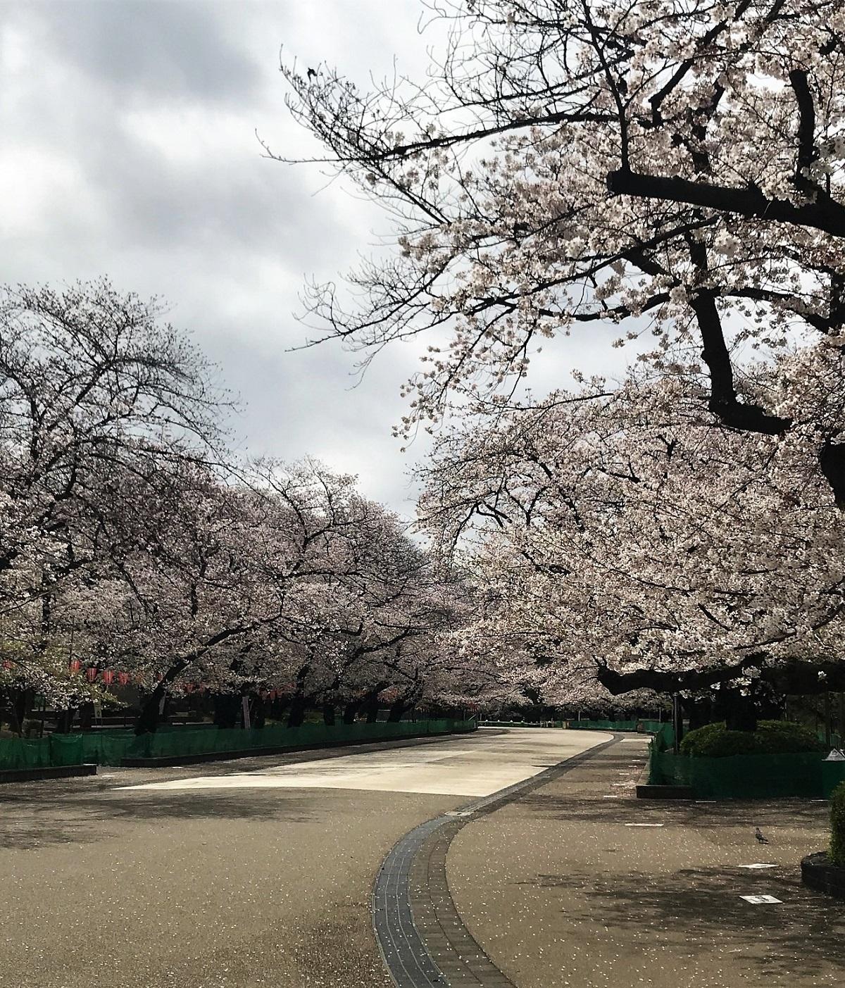 上野公園�U.jpg