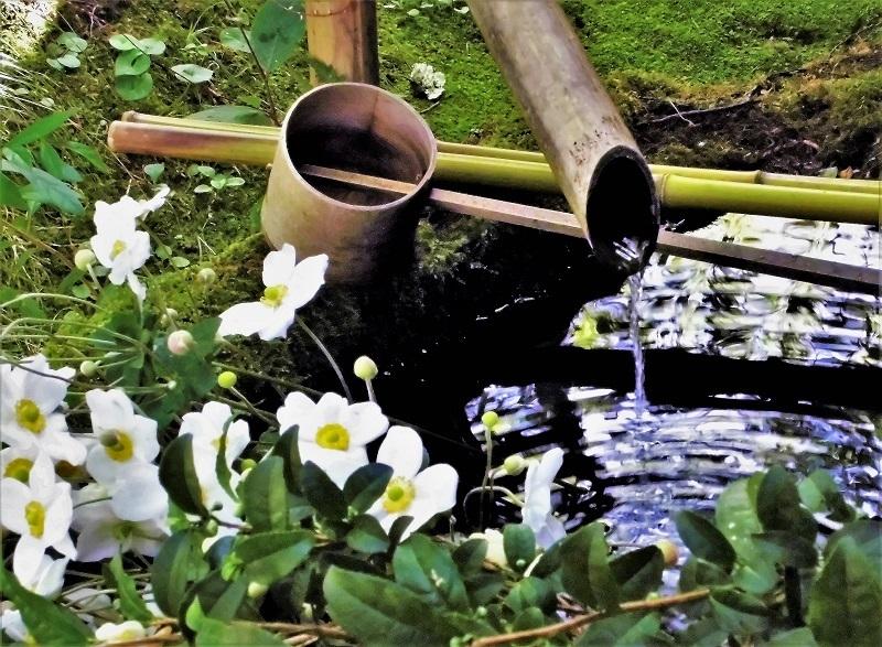 亀の井ガーデン4.jpg