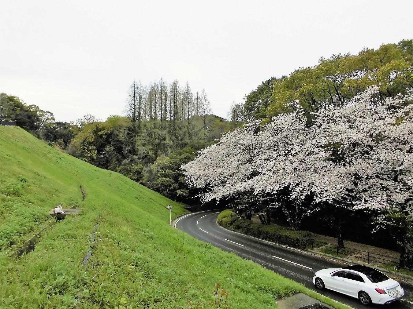 北九州市立美術館 (2).JPG