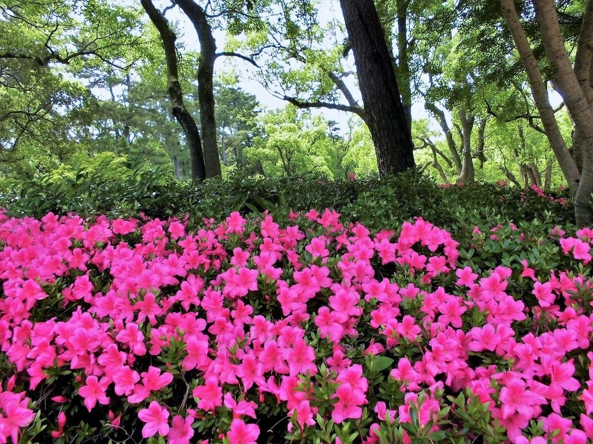 夜宮公園サツキ�A.JPG