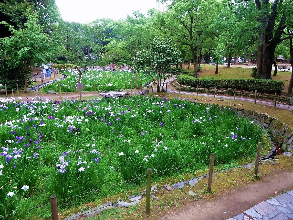 夜宮公園菖蒲.jpg