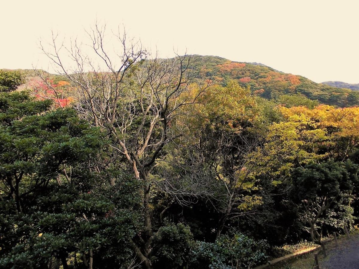 小倉 足立山系2.jpg