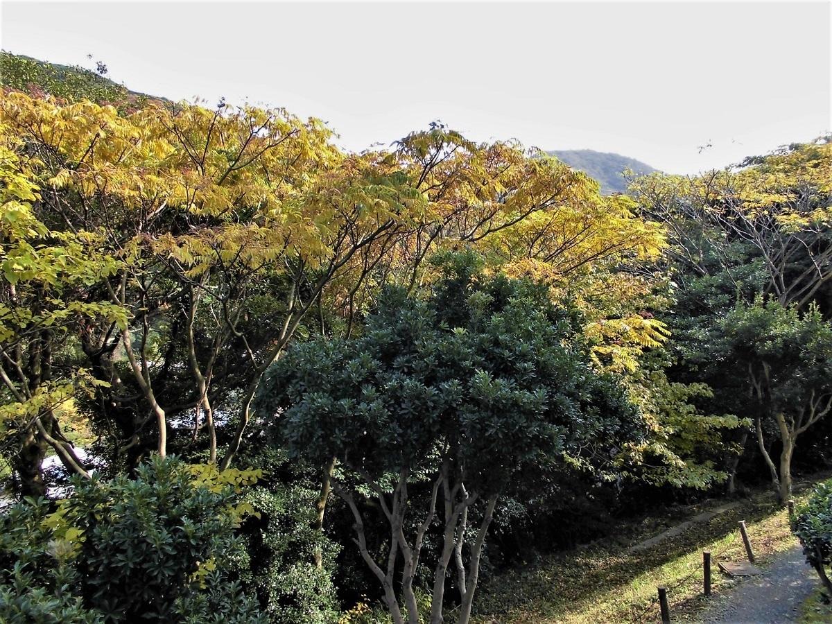 小倉 足立山系3.jpg