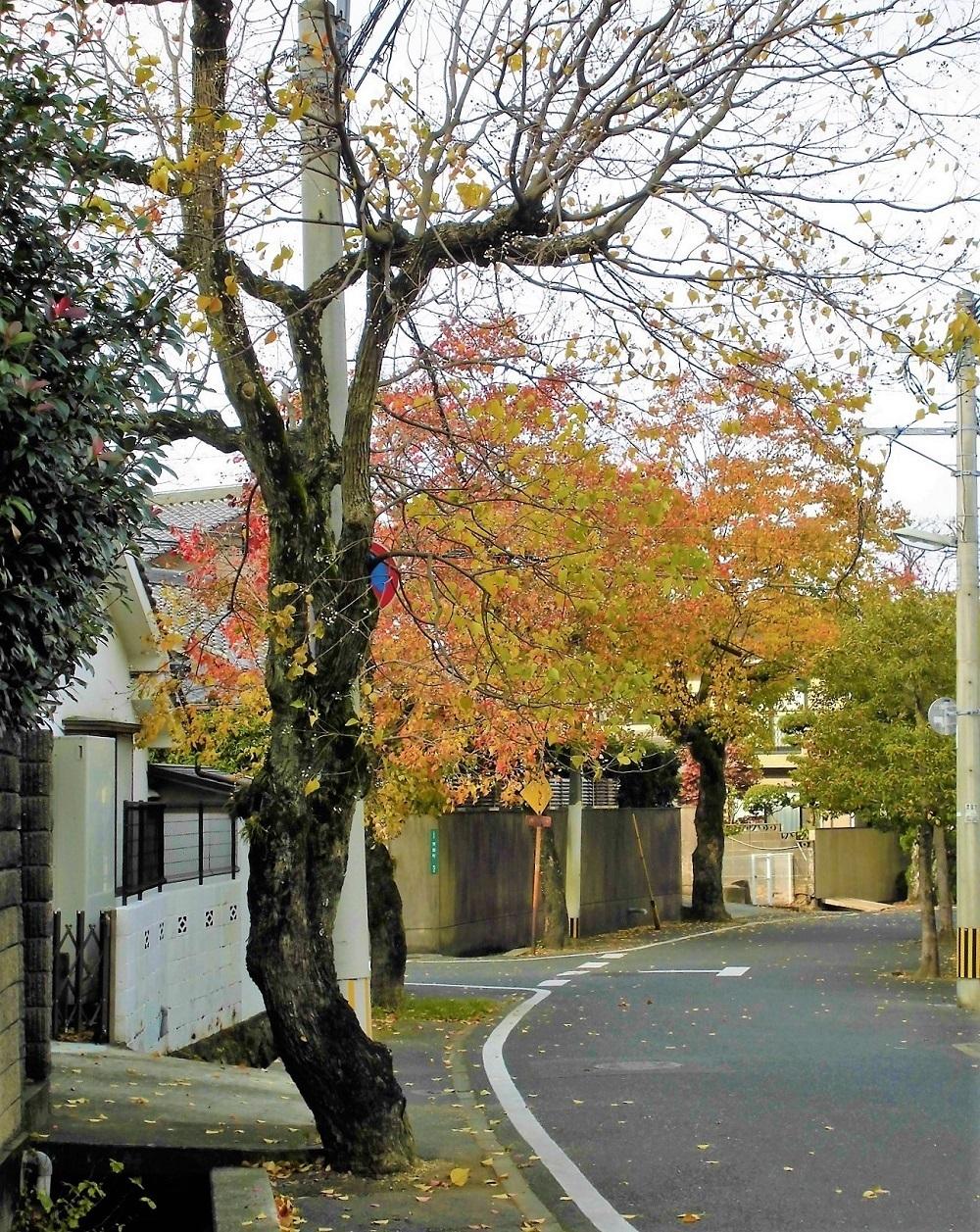 小倉北区20111123.jpg