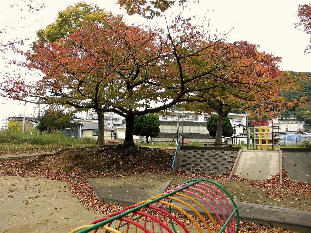 小倉北区公園.jpg