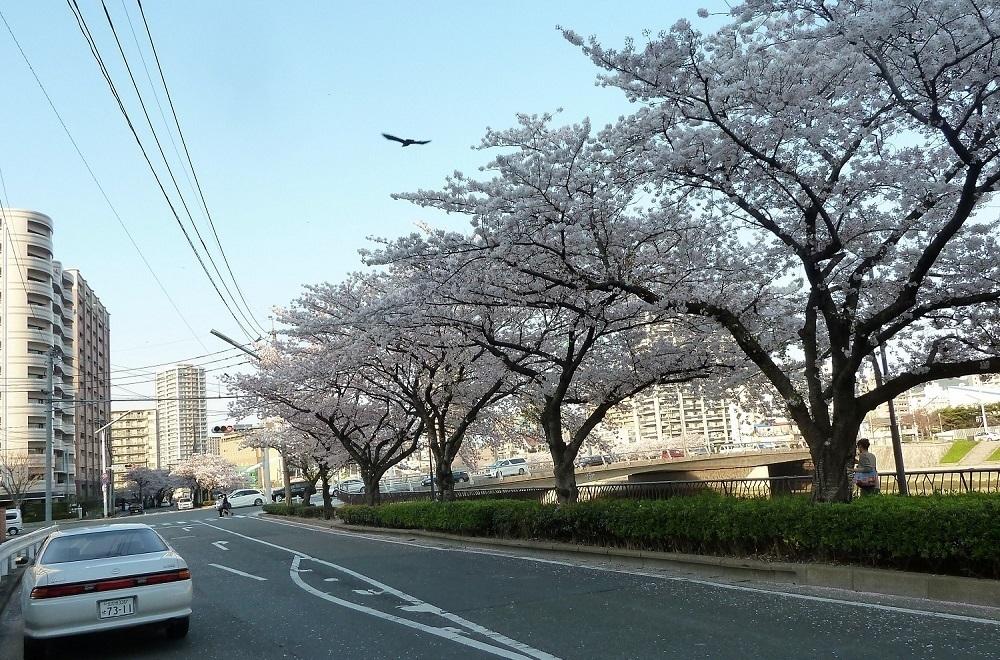小倉北区紫川.jpg