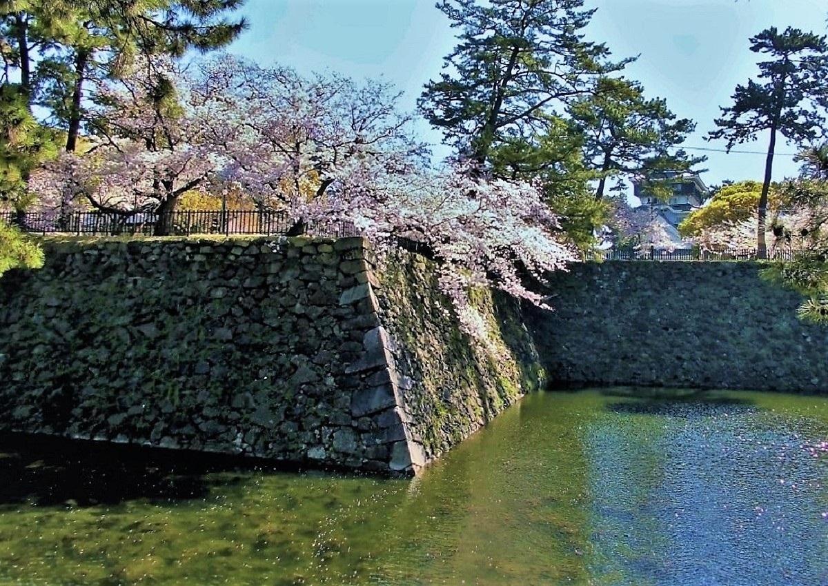 小倉城 桜�U.jpg