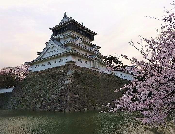 小倉城の桜.jpg