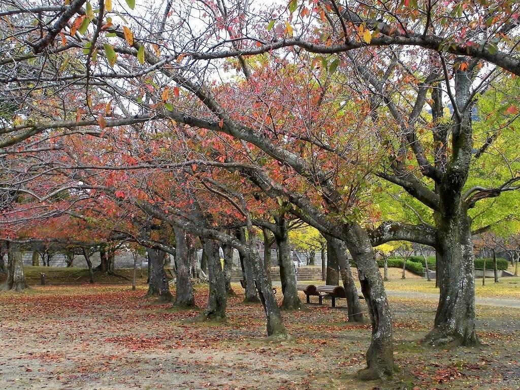 小倉平和公園2.jpg