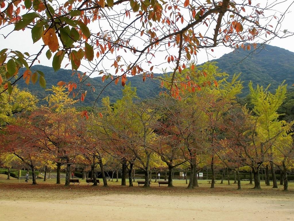 小倉平和公園3.jpg
