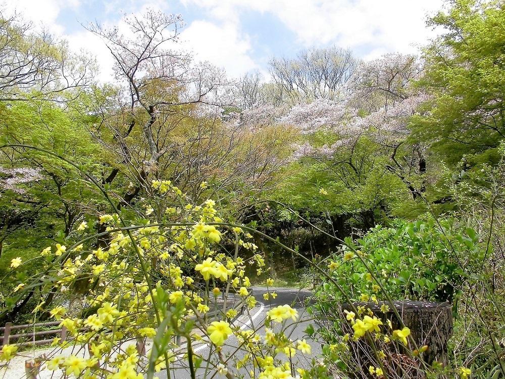 小倉足立公園1.jpg