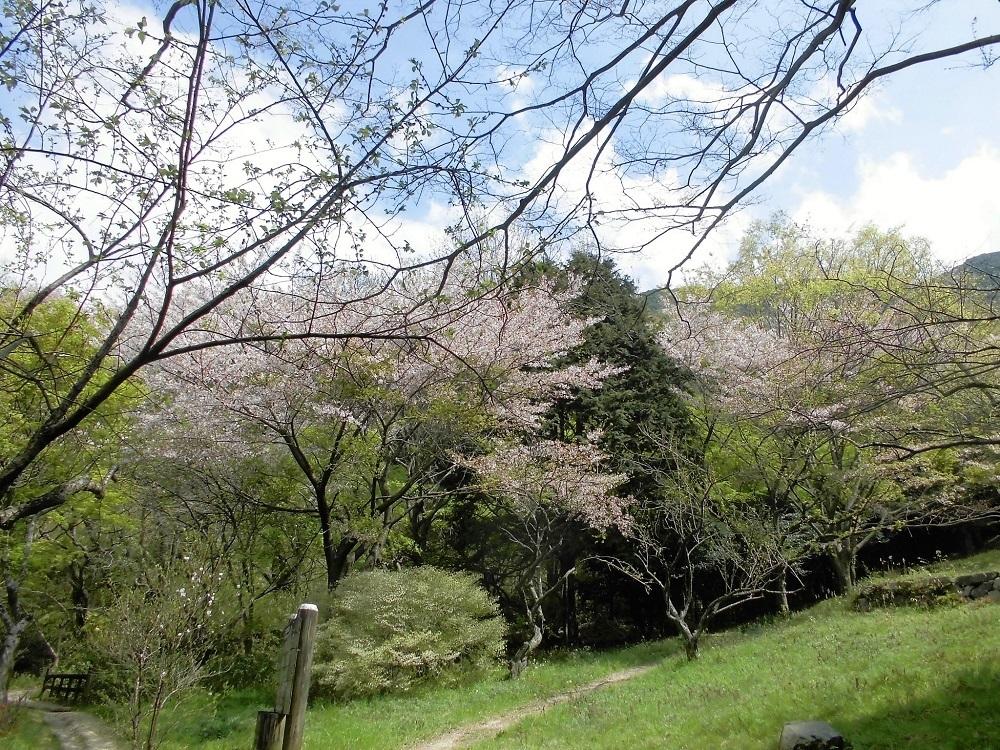 小倉足立公園3.jpg