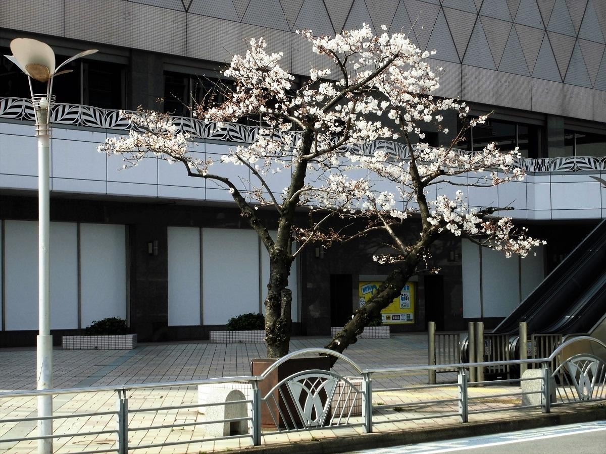 小倉駅南口.jpg