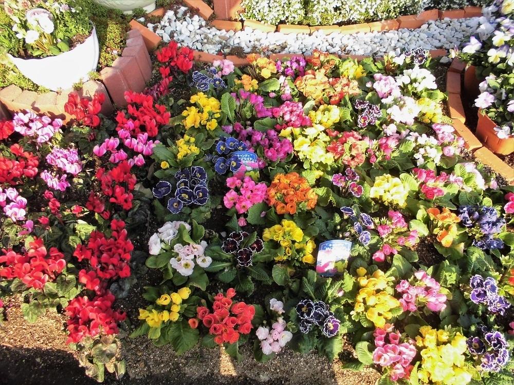 春の花�A.jpg