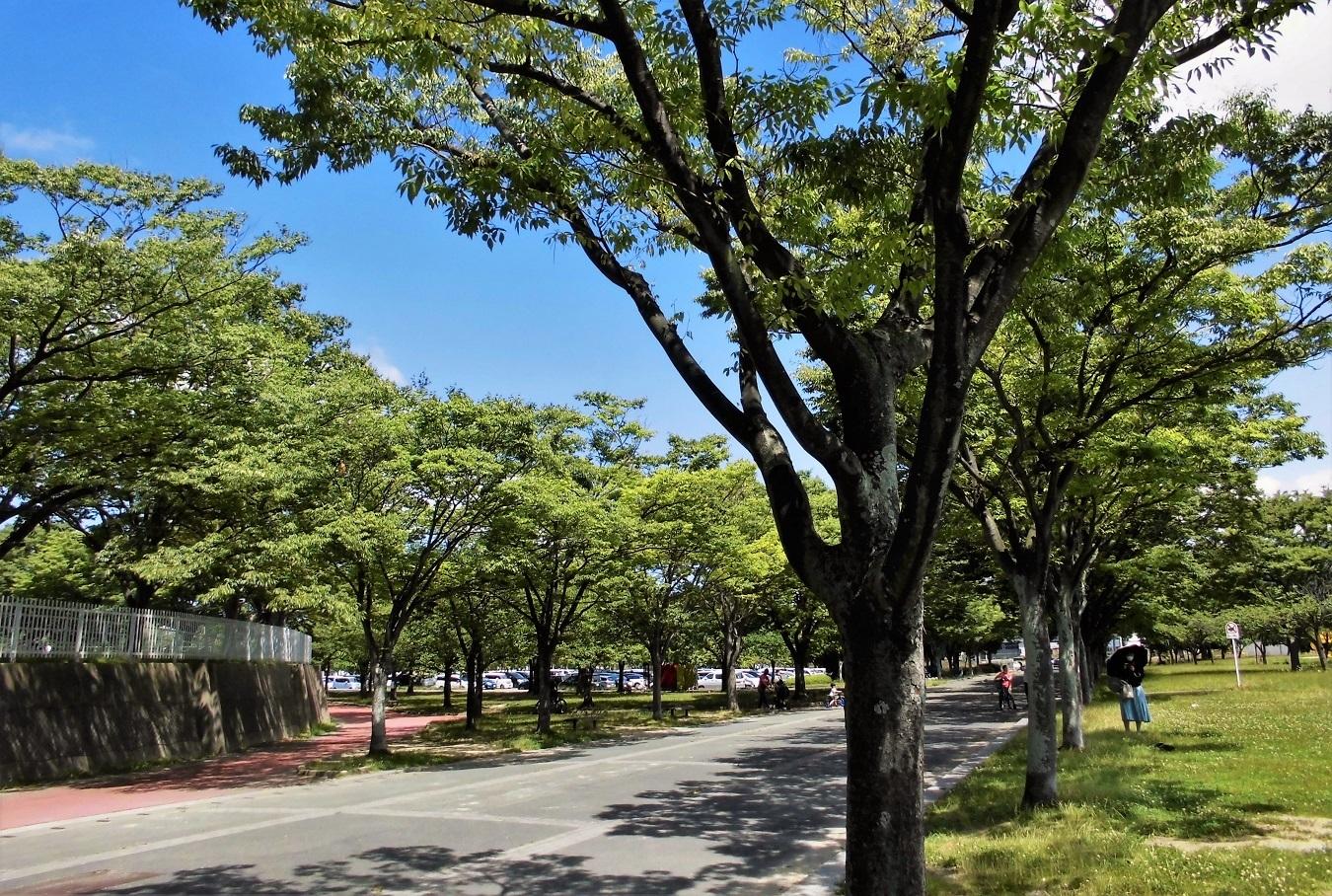 本城公園 (1).JPG