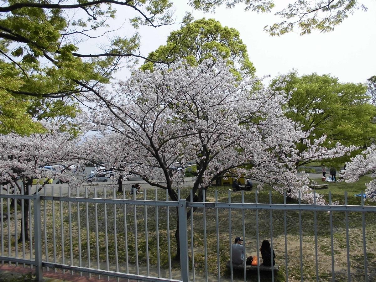 本城公園4.jpg