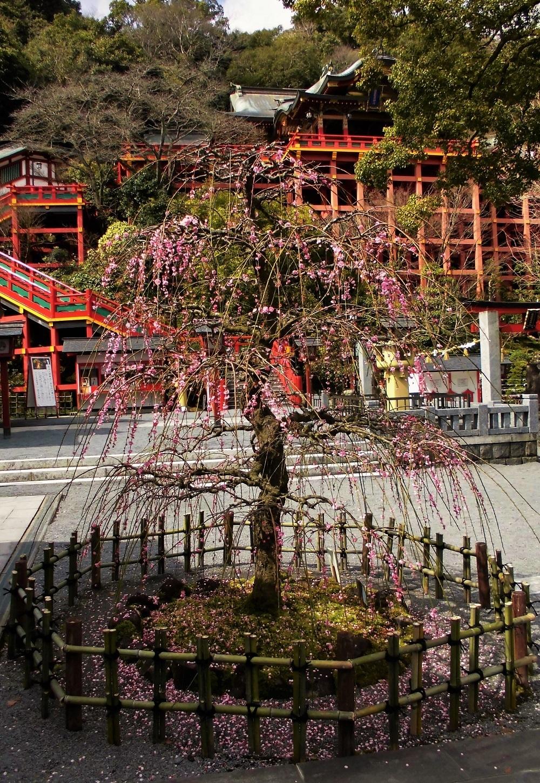 祐徳稲荷神社�C.jpg