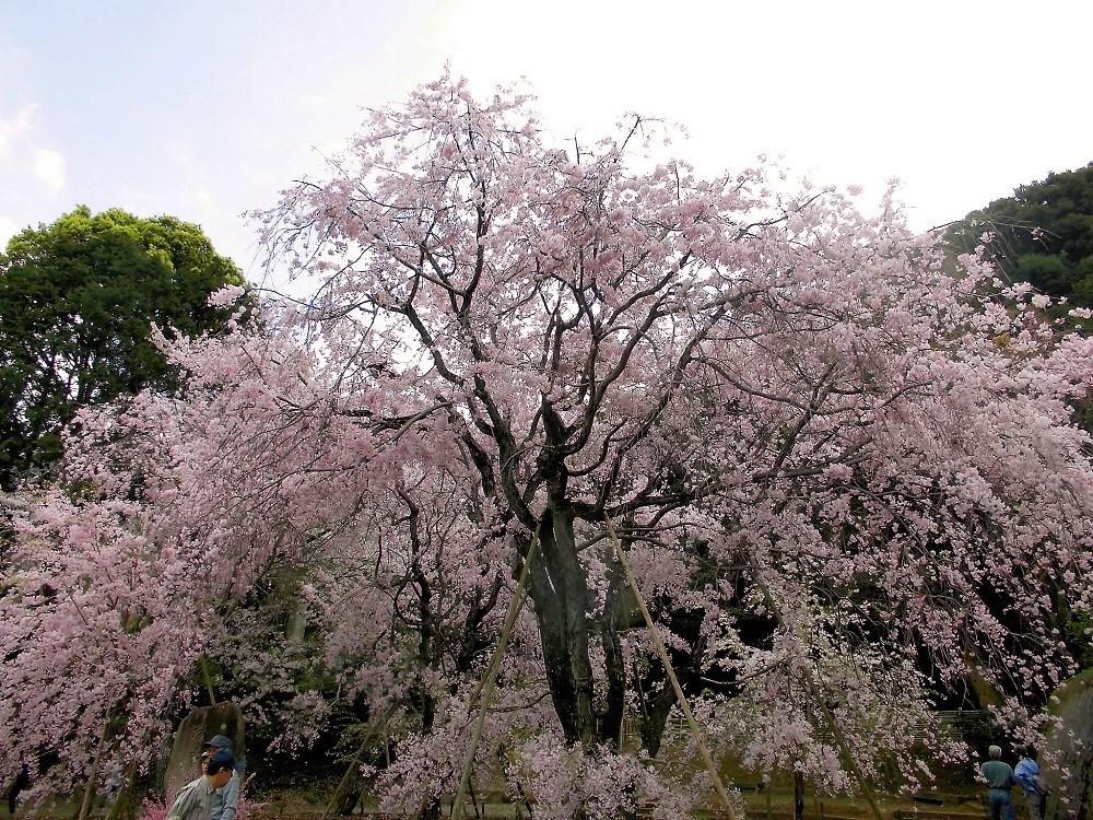 足立山妙見宮4.jpg