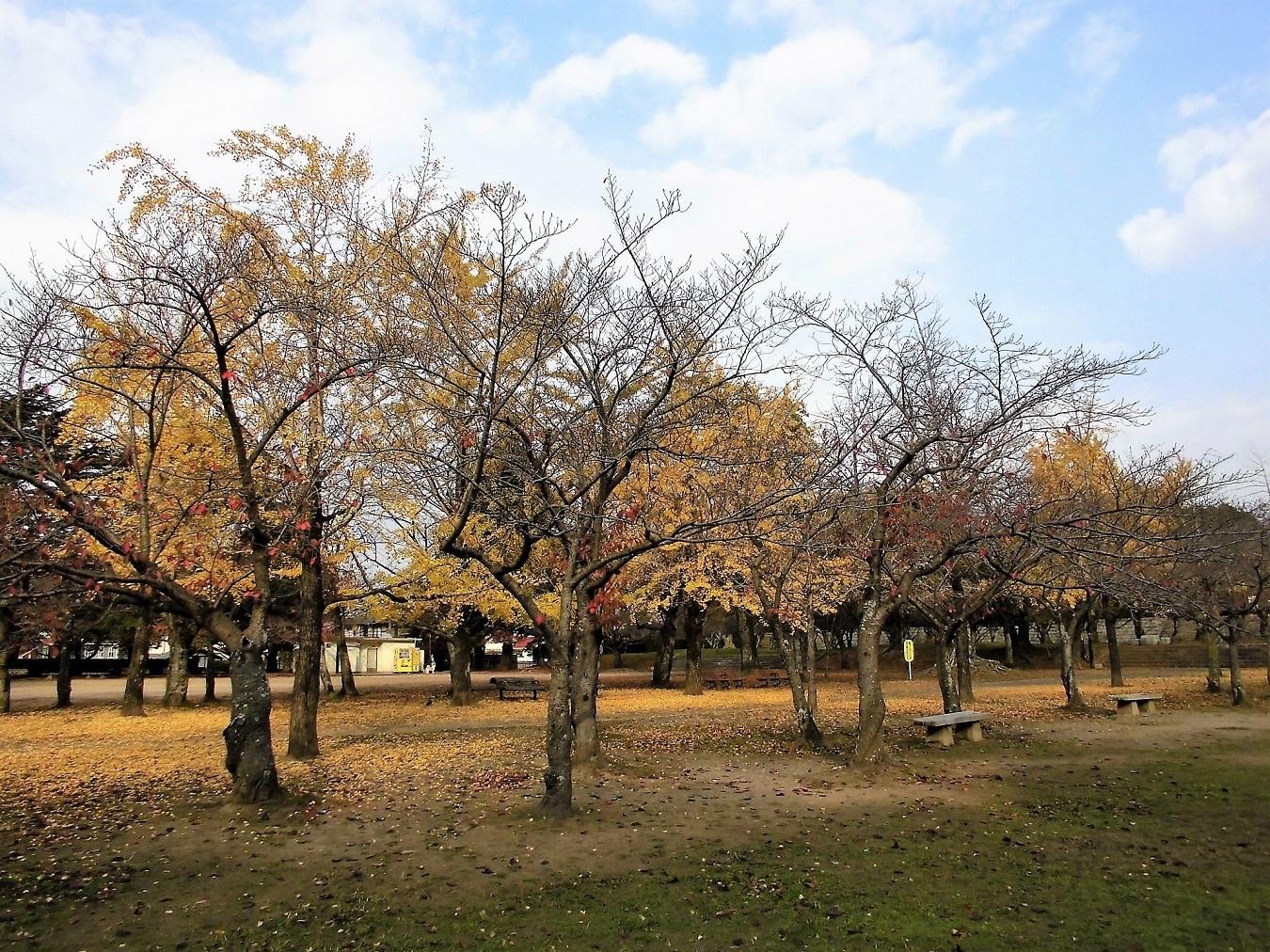 足立平和公園.jpg