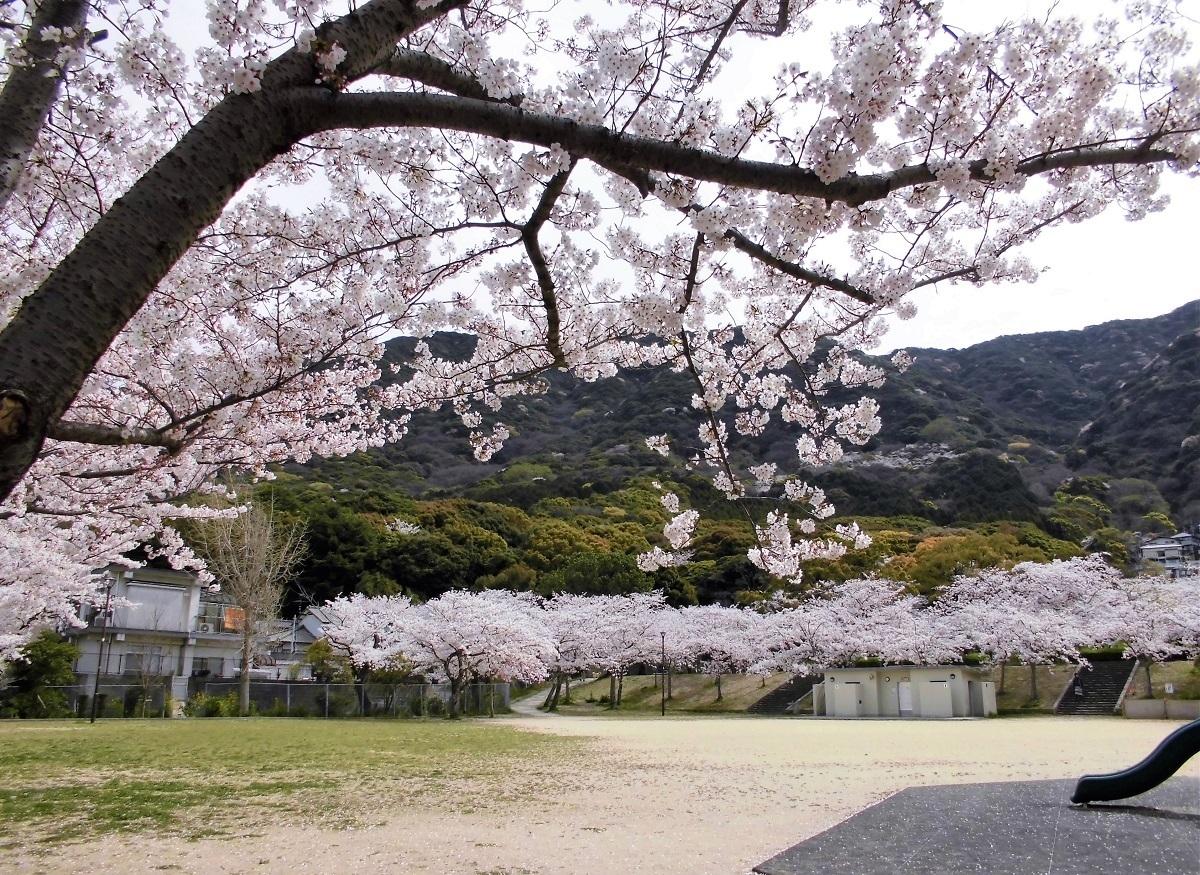 足立森林公園.jpg