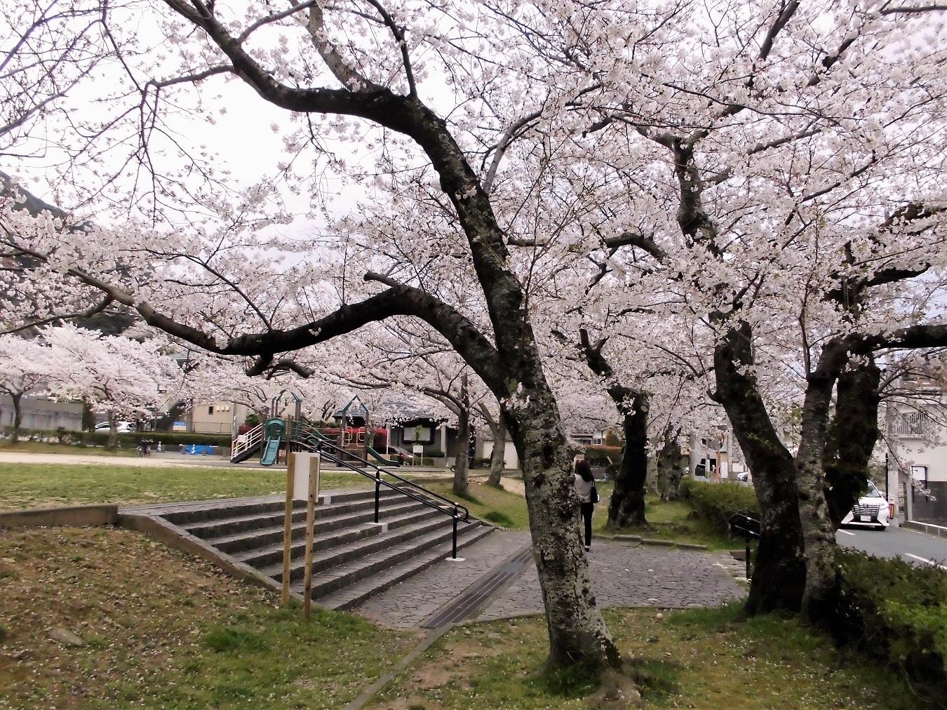 足立森林公園 (3).JPG