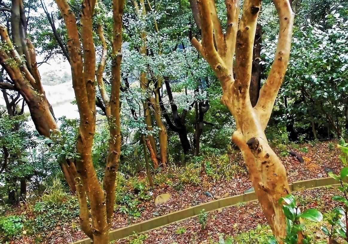 雑木林.jpg