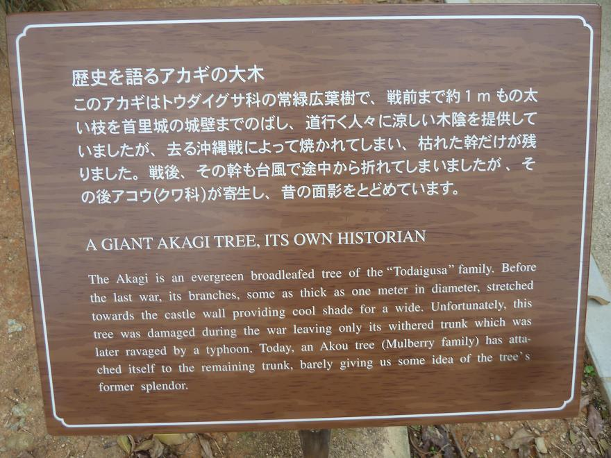 a giant akagi.jpg