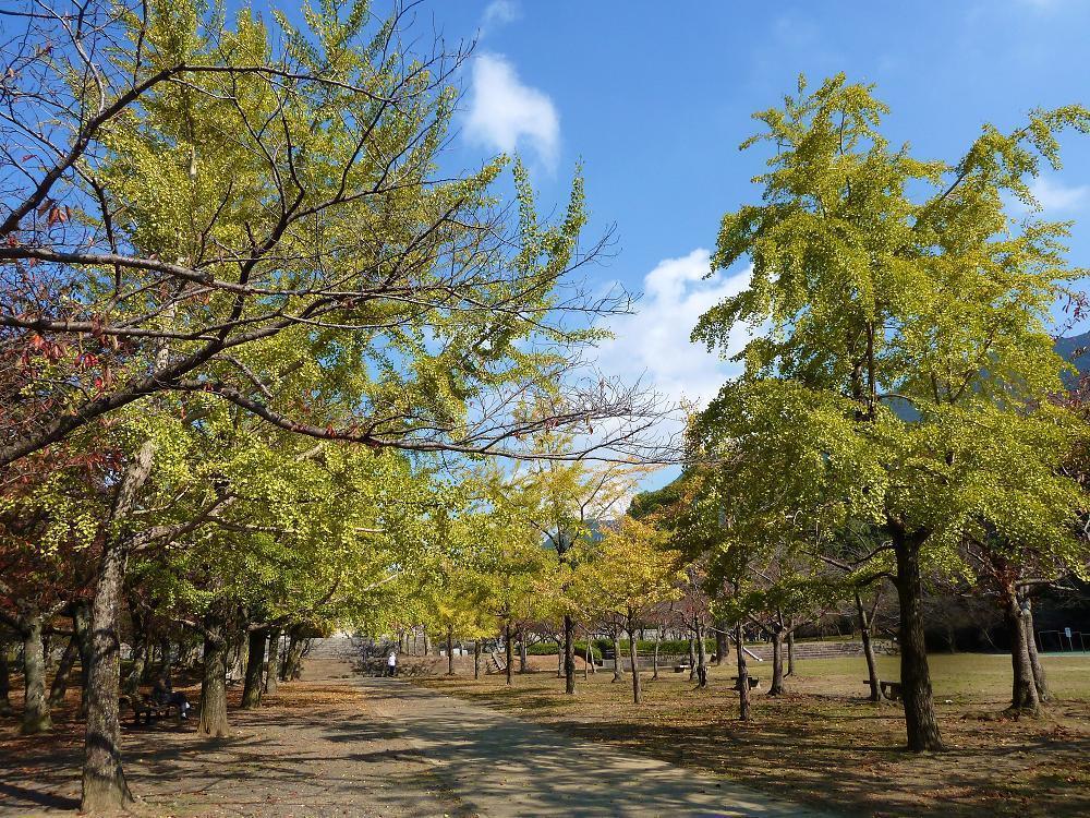 adachi shinrinpark.jpg