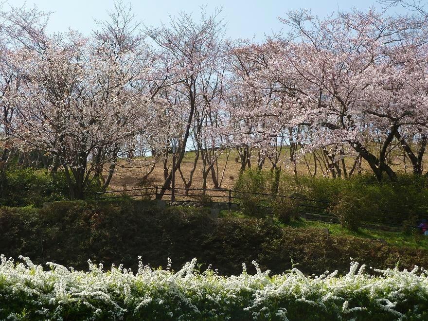 fukuoka central park.jpg