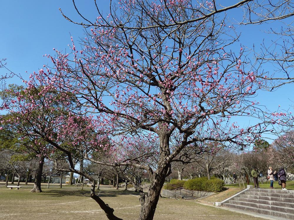 kokura adachipark.jpg