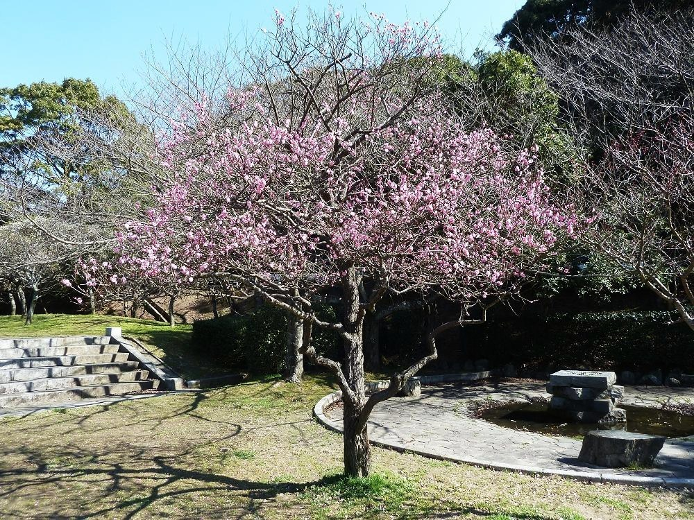kokura adachipark2.jpg