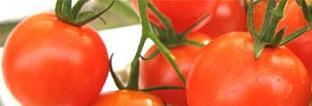 mini tomato.JPG