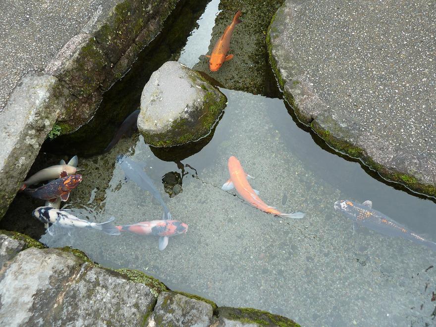 shimabara3a.jpg