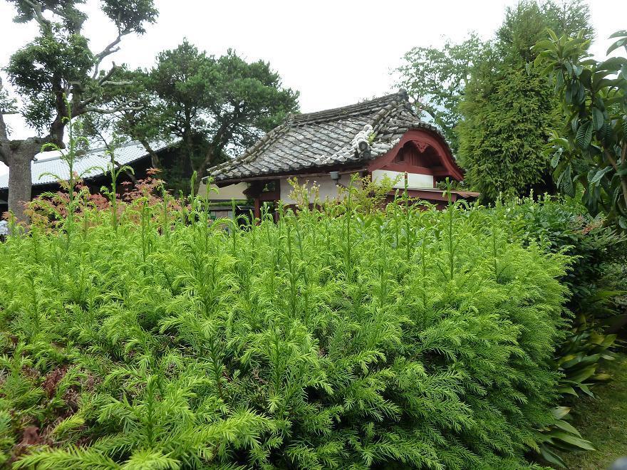 shimabara5.jpg
